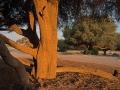 nam-pfl10-424 Nikon d4s