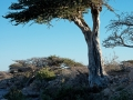 oma-pfl11-526 Nikon d800