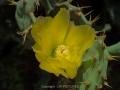 sri-pfl10-531 Nikon d4s