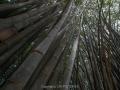 sri-pfl10-545 Nikon d4s