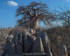 bot-pfl11-534 Nikon d4s