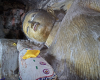 sri-rel10-555 Nikon d4s
