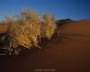 alg-pfl10-525 Leica M4-P